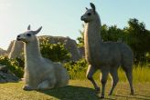 Planet Zoo - South America Pack DLC (PC)